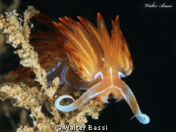 the &quot;orange&quot; nudi by Walter Bassi 